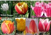 Продаю цветы к 8 марта