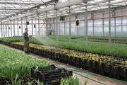Тюльпаны оптом от первого поставщика