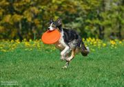 Дрессировка собак -- эффективно и с удовольствием
