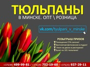Цветы к 8 марту оптом и в розницу. Предзаказ