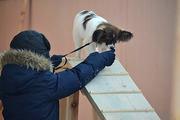 Дрессировка мелких и декоративных пород собак. Групповые занятия