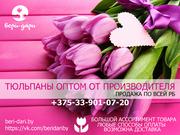 Тюльпаны оптом от производителя. Продажа по всей РБ.