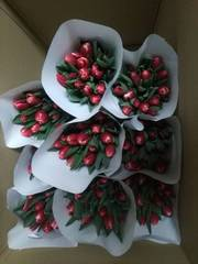 Голландские тюльпаны к 8 Марта оптом (20 видов)