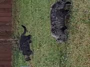 Котята в дар 3мес.