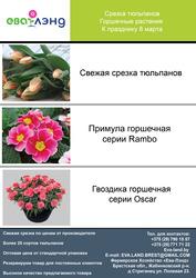 Тюльпаны опт от производителя.крокус и примула.