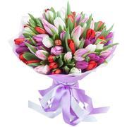 Цветы в горшках,  крокусы,  гиацинты,  примула.