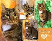 Люси – кошка с зелеными глазами в дар!
