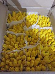 Тюльпаны к 8 марта! Ассортимент,  цена,  качество!